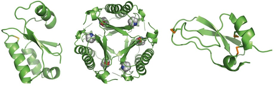 semisynthesis of proteins by expressed protein ligation